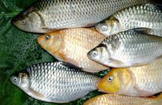 В Пензенской области торговали небезопасной рыбой