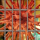 Что спасёт от коронавируса: тюрьма или любовь?