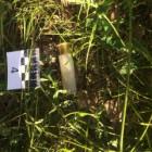 Труп в багажнике. В лесу под Пензой произошло жестокое убийство