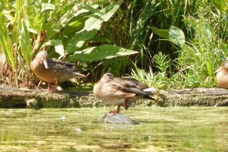 В Пензенской области из-за коронавируса отменен весенний сезон охоты