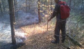 В Пензенской области начали бушевать лесные пожары