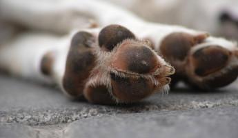 В Пензенской области нашли висящий на дереве труп собаки