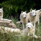 Эвтаназия и стерилизация: в Пензенской области объявлена охота на безнадзорных псов