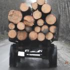 Жителя Пензенской области задержали из-за семи сосен
