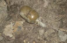 Житель Пензы обнаружил на улице гранату