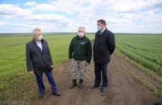 Пензенский губернатор призвал вовремя информировать пчеловодов об обработке полей