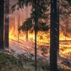 Рослесхоз предупредил Пензенскую область