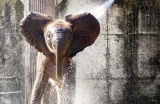 Спасите животных! Пензенский зоопарк просит помощи