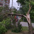 В Пензе убрали около 40 поваленных ураганом деревьев