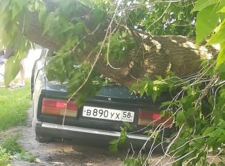 В Пензенской области легковушку раздавило деревом