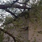 Дерево огромных размеров упало на двухэтажный дом в Пензе