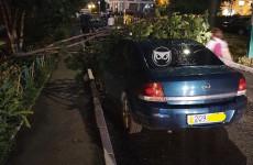 В Пензе падающие от урагана деревья осложнили жизнь автомобилистам