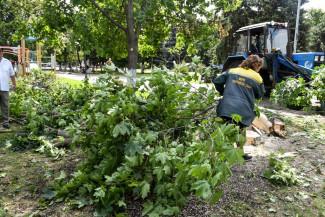 Ураган в Пензе повалил около 50 деревьев