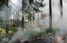 В Земетчинском районе ожидается 5 класс пожарной опасности