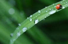 Во вторник пензенцам обещают дождливую погоду