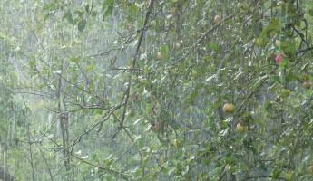 Завтра на Пензенскую область обрушится сильный дождь