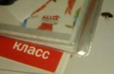 В Кузнецке по книжкам и кружкам девочки побежали тараканы