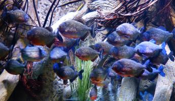 В пензенском океанариуме прокуратура нашла ряд нарушений