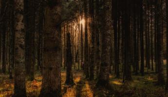 В Пензенской области введены ограничения на посещение леса