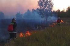 В Шемышейском районе Пензенской области сгорело 17 гектаров травы