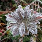 Завтра в Пензенской области ожидаются заморозки