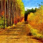 25 сентября в Пензенской области сохранится теплая погода