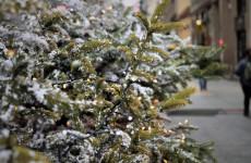 Пензенская новогодняя елка может поменять свое привычное местонахождение