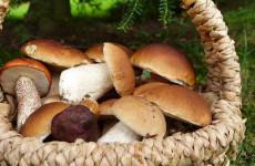 Отпуск и грибы. Иван Белозерцев поделился фотографией с отдыха