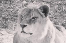 В Пензе умерла 23-летняя «королева зоопарка»