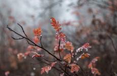 Пензенская область: прогноз погоды на 19 октября