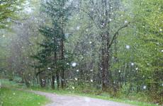 21 октября в Пензенской области ожидается мокрый снег
