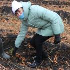 В Пензенской области планируют высадить более 120 тысяч сеянцев и саженцев деревьев