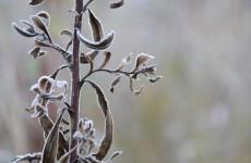 28 октября в Пензенской области похолодает до минус 6 градусов