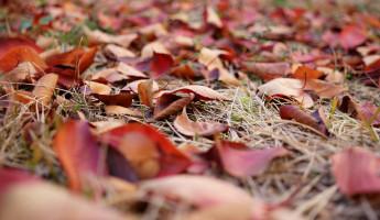 Какая погода ожидает пензенцев 29 октября?