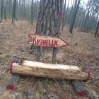 В Пензенских лесах установили лавочки-навигаторы
