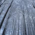Какая погода ожидает пензенцев в первый день зимы?