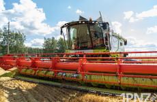 Рекордный урожай = рекордные цены на хлеб?! Почему дорожают продукты в Пензенской области