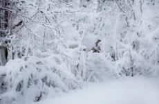 13 января в Пензенской области ожидается 26-градусный мороз