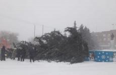 В Пензенской области ветер повалил елку на центральной площади города