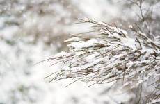 Воскресенье пензенцы снова встретят со снегом и минусовой температурой