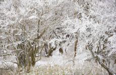 Пензенцев предупреждают о 30-градусном морозе 19 января