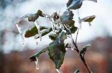 Пензенская область: прогноз погоды на 25 января