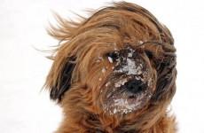 Вторник встретит пензенцев мокрым снегом и сильным ветром