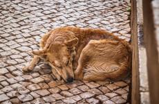 В Пензе усилят работу по отлову бездомных собак