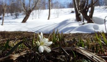Пензенская область: прогноз погоды на 9 марта