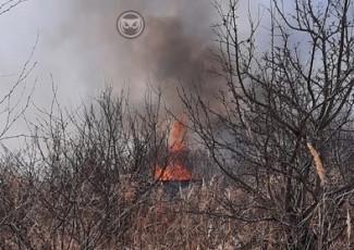 «Горят дачи». Крупный пожар под Пензой тушат более 70 человек