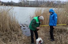 Названа причина массовой гибели рыбы в одном из прудов Пензы
