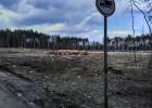 «Можно хоронить на деревьях». Зачем в Заречном вырубили лес вокруг кладбища