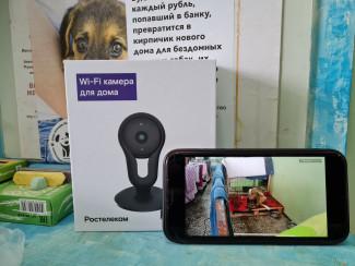 Видеонаблюдение от «Ростелекома» поможет пензенскому приюту для животных присматривать за питомцами