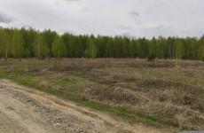 Вырубят ли деревья ради коттеджей? Решена судьба березовой рощи под Пензой